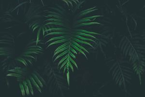 Big Leaves Cool Temperature 5k Wallpaper