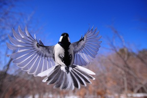 Bird Flapping Wings Wallpaper