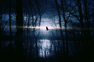 Bird Flying Forest Woods Silhouette Wallpaper