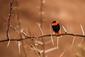Bird Photography Wallpaper