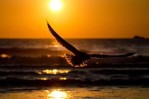 Bird Sunset Wallpaper