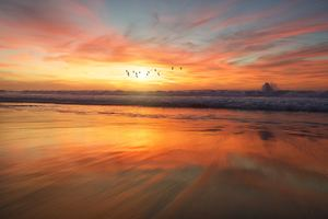 Birds Flying Over Beach 4k Wallpaper