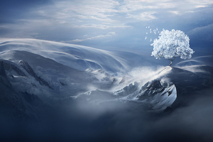 Birds Flying Over Snow Tree On Mountain Peak Wallpaper