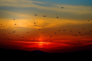 Birds Flying Towards Sunset 4k 5k Wallpaper