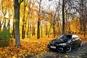 Black BMW In Forest