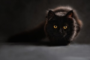 Black Cat Glowing Eyes 4k