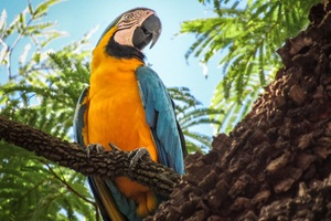 Blue And Yellow Macaw 4k