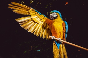 Blue And Yellow Macaw 5k Wallpaper