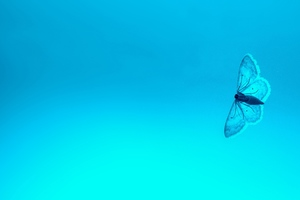 Blue Butterfly 4k Wallpaper