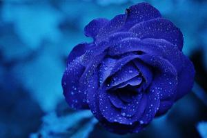 Blue Flower 4k 5k Wallpaper