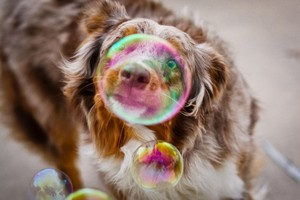 Bubble Dog Photography