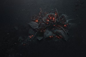 Burning Roses 5k Wallpaper
