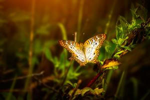 Butterfly On Leaf Wallpaper