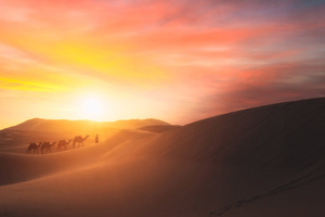Camel Walking In The Desert Wallpaper