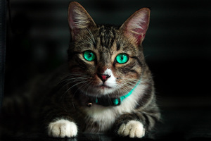 Cat Green Eyes 4k Wallpaper
