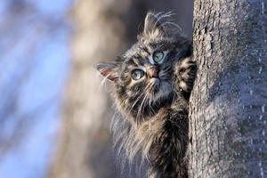Cat Hiding Behind Tree Wallpaper