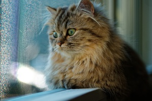 Cat Looking Through Window Wallpaper