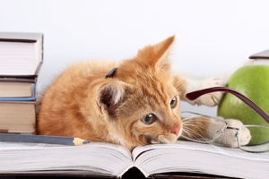 Cat Lying On Books
