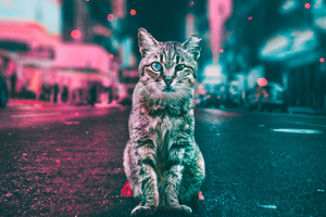 Cat Road Lights Wallpaper