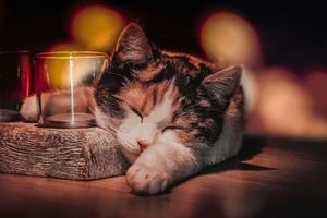Cat Sleeping Wallpaper