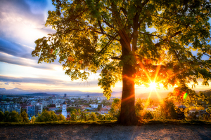 City View Sunrise Looking Out Wallpaper