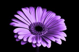Close Up Of Purple Petaled Flower Wallpaper