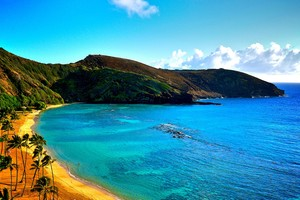 Coast Of Hawaii
