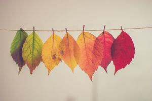 Colorful Autumn Leafs 5k Wallpaper