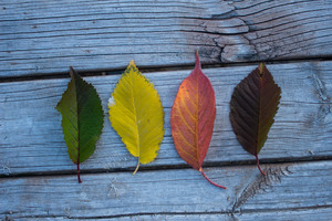 Colorful Leaves Wood Outdoors Wallpaper
