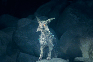 Crystal Foxes Of Crait Star Wars The Last Jedi