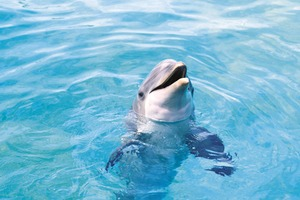 Cute Dolphon