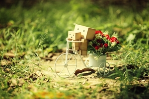 Danbo Best Pic Wallpaper