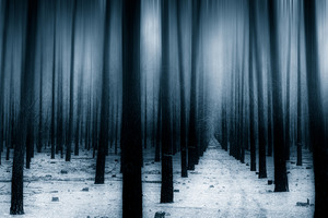 Dark Forest Woods Snow Winter 8k Wallpaper