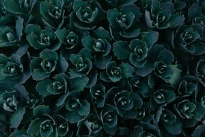 Dark Green Plants Abstract 5k Wallpaper