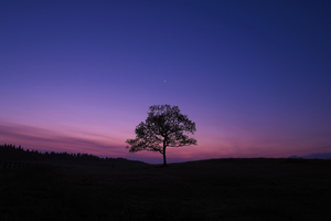 Dark Sky Tree Purple Sky Nature
