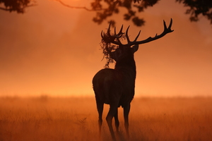 Deer Sunlight Nature Wallpaper