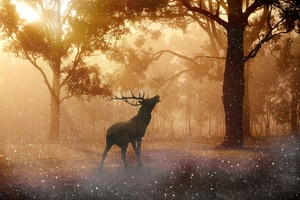 Deer Wild Nature Forest 4k Wallpaper