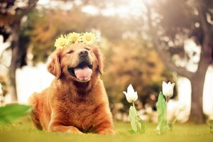 Dog Flowers Smiling