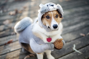 Dog Funny Outfit Wallpaper