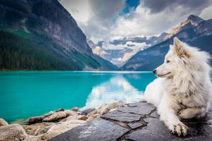 Dog Lake Louise Wallpaper