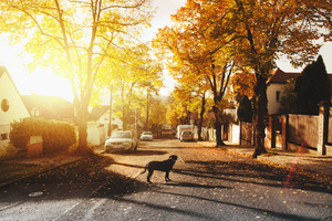 Dog On Concrete Road Homes Trees Sunlights 4k Wallpaper