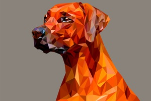 Dog Polygon Facets Wallpaper