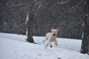 Dog Running In A Snow Wallpaper