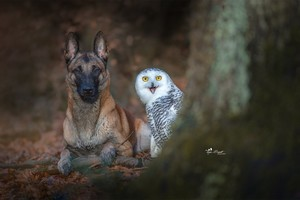 Dog With Owl Wallpaper
