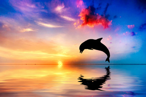Dolphin Jumping Out Of Water Sunset View 4k