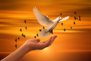 Dove Bird Flying Away Wallpaper