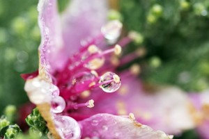 Droplets Flower