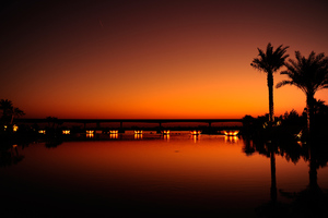 Dubai Palm Trees Sunset Reflection Wallpaper