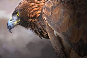 Eagle Digital Art 2