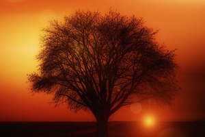 Earth Orange Road Silhouette Sun Sunset Tree